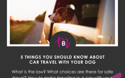 Car Travel With Your Dog